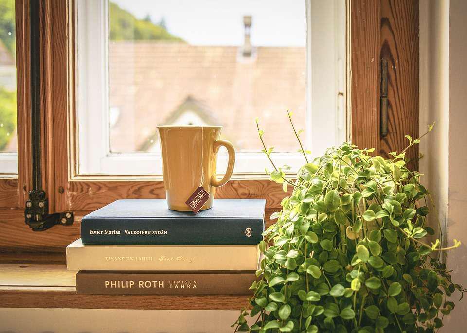 windowsill of plants books and tea