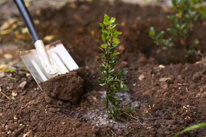 planting plants with shovel