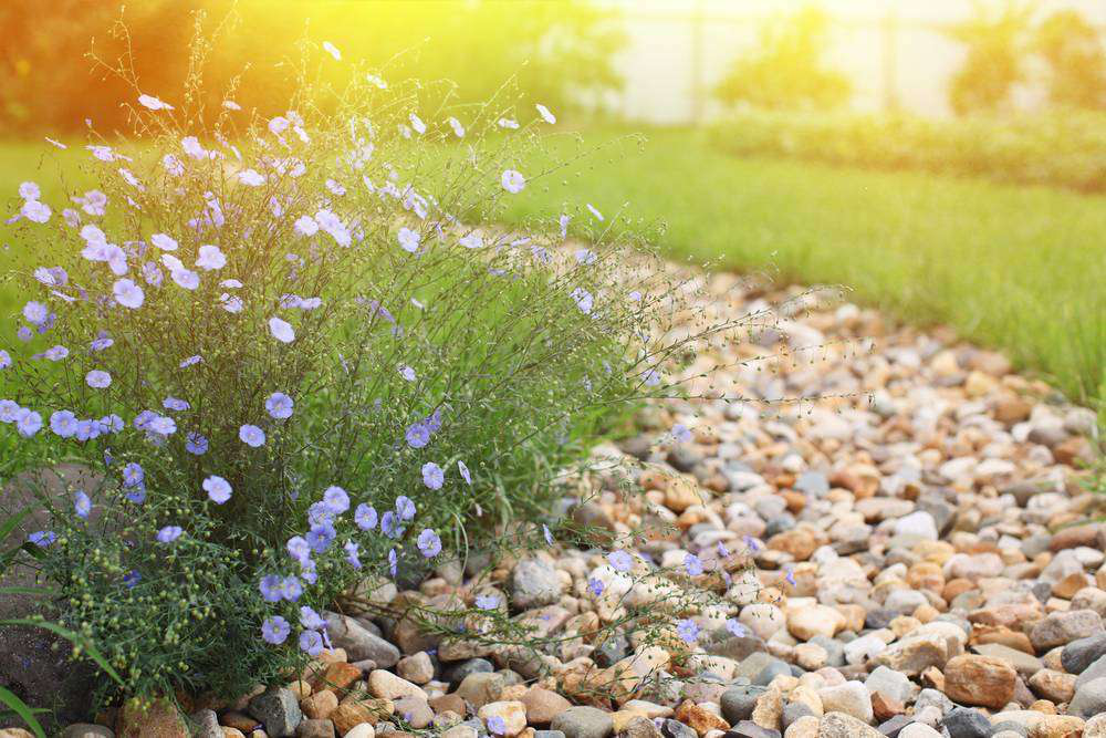 rock path with flowers