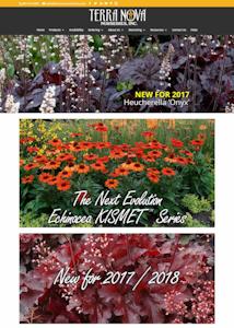 terra nova web design