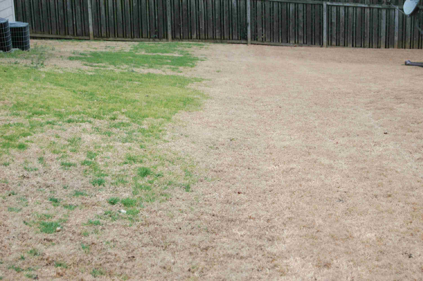 Comparing Pre Emergent Herbicides To Using Nothing