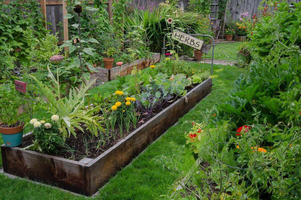 How to create an herb garden in you own backyard | Total Landscape Care