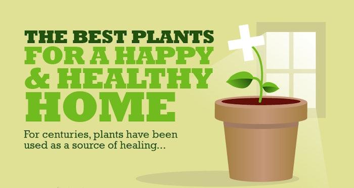 BestPlantsHealthyHappyHome-infographic-crop