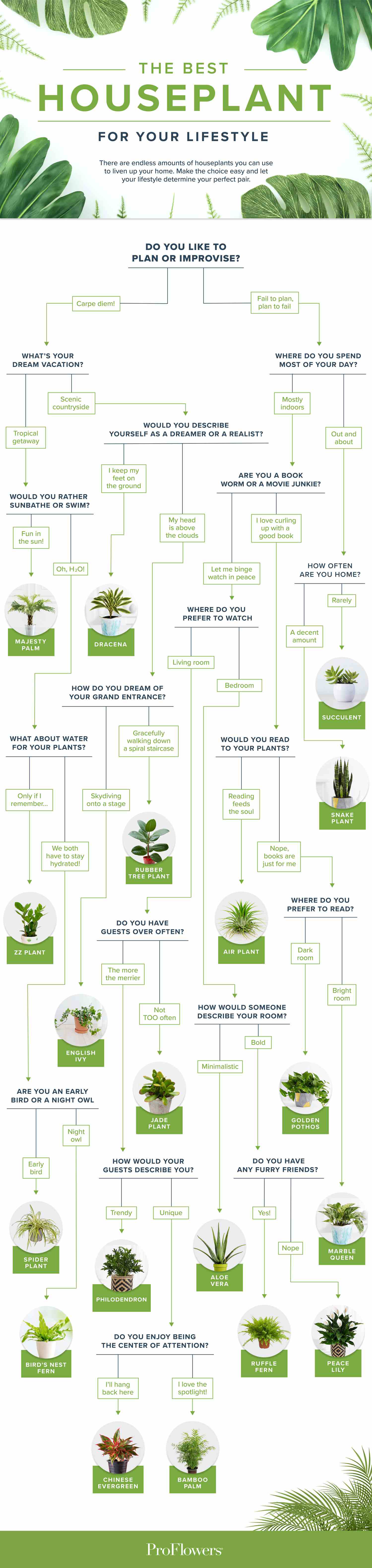 ProFlower Infograph that helps to guide someone to find the best houseplant for them