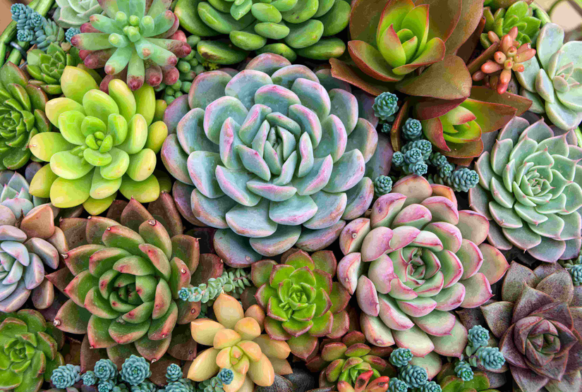 Photo Of Various Succulents