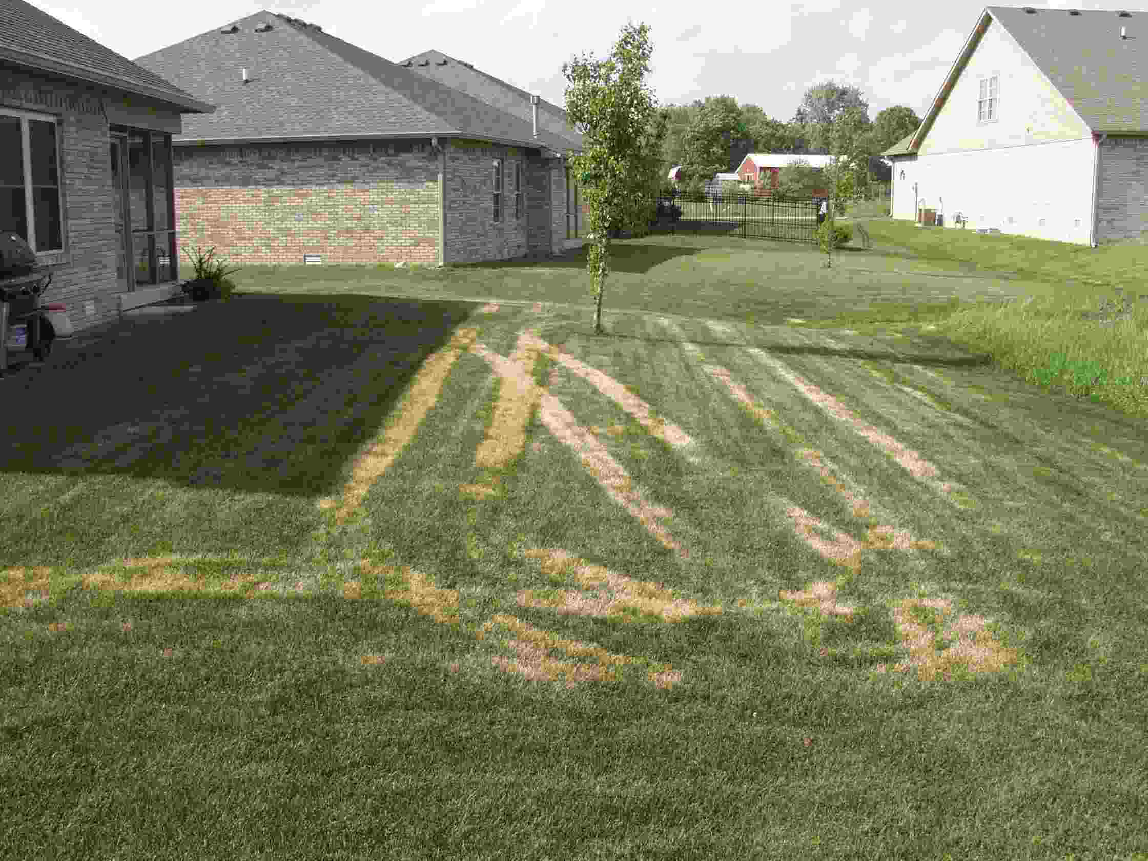 Drought damage on lawn from ride on spreader