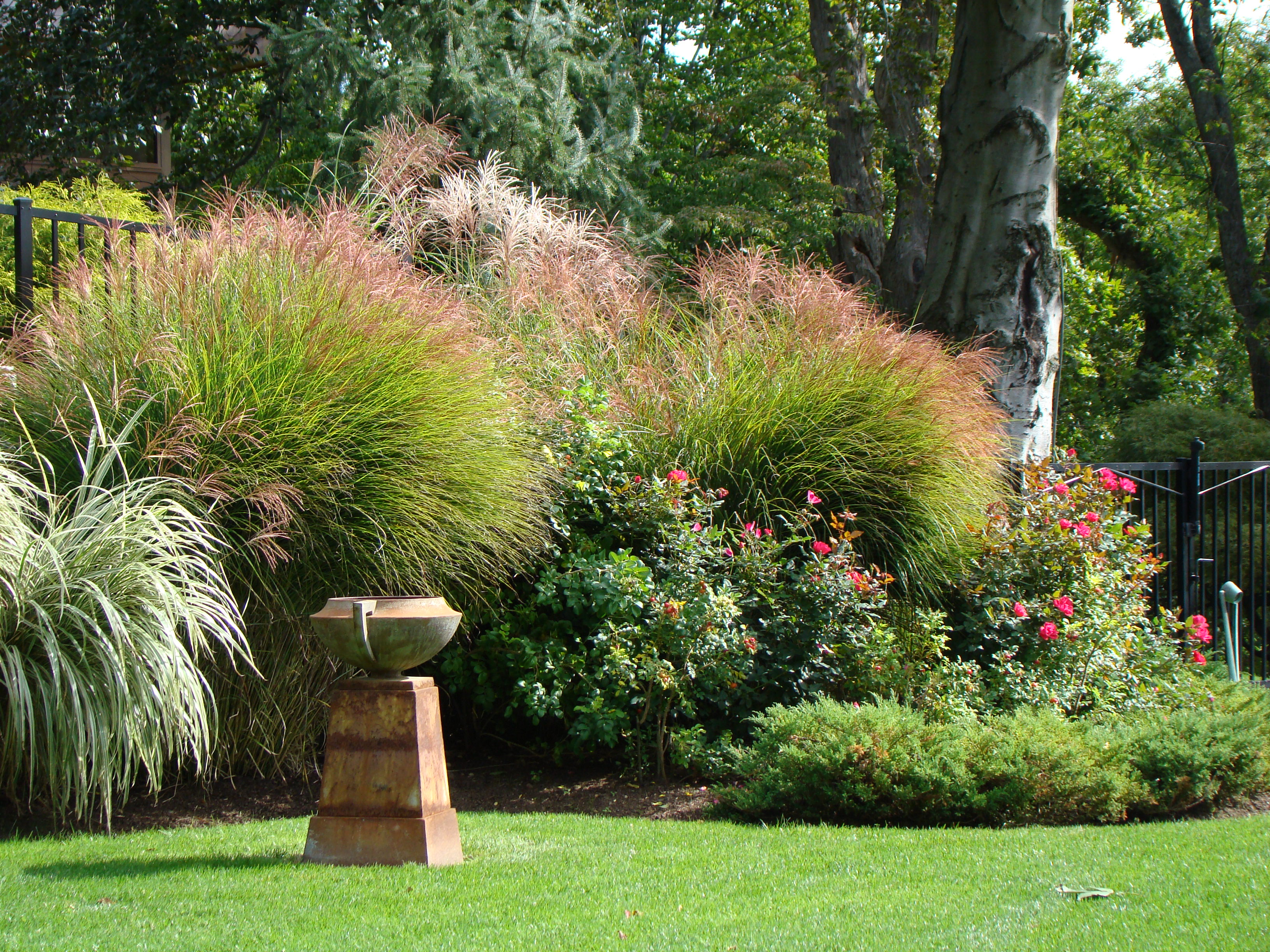 Tips For Maintaining Ornamental Grasses In Landscapes