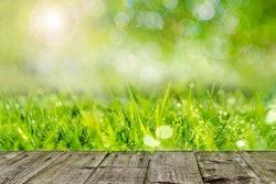 wooden-deck-green-grass