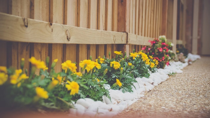 Yellow marigolds and other flowers with white landscaping rocks lining a wooden fence