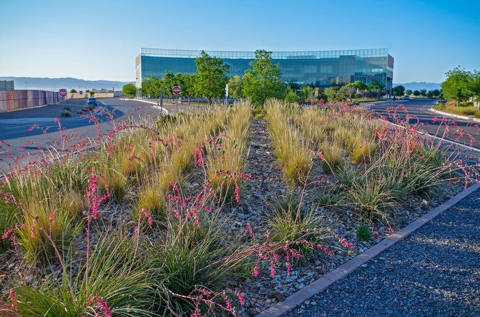 median with rows of pink flowering plants