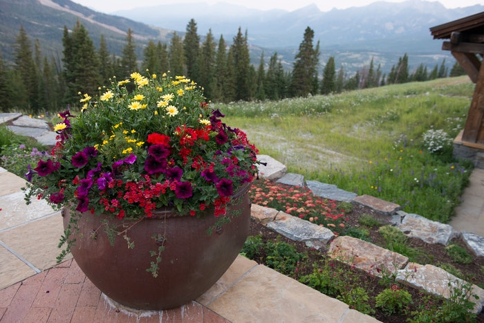large garden container filled with purple, red, and yellow flowers