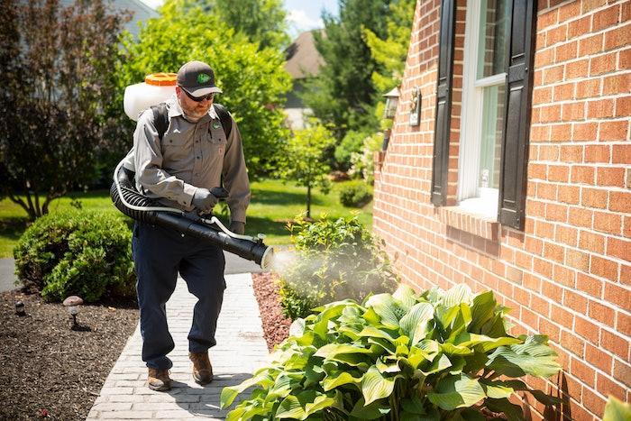 professional performing pest control