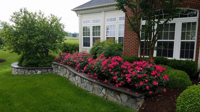 stone-wall-roses-planting.jpg