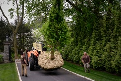 special equipment guided by landscapers moving a large tree
