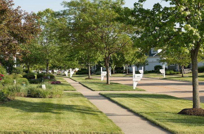 Community sidewalk lined with tress