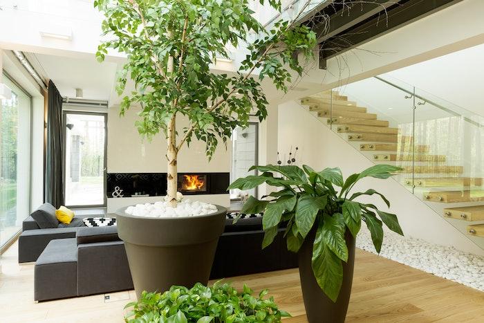 interior plantscape pots living room