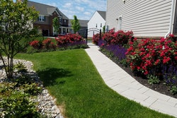 landscaping planting