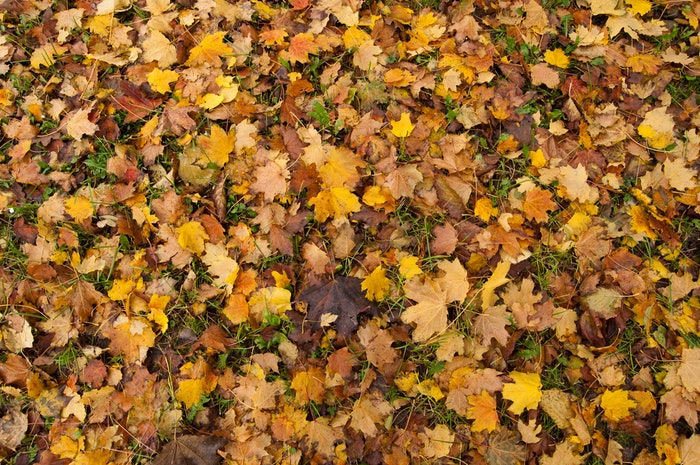 Fallen leaves in varying shades of yellow, orange, and brown